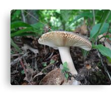 Fancy Gills Canvas Print