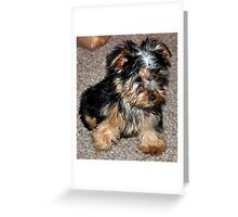 Shiney Happy Puppy! Greeting Card
