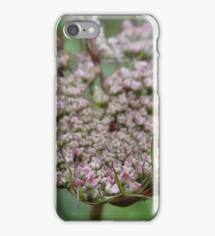 Young Queen Ann's Lace bud iPhone Case/Skin