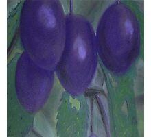 Purple Plums Photographic Print