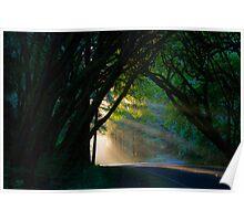 Redwood Forest Sunset Poster