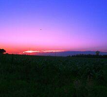 Purple Corn by Scraylan