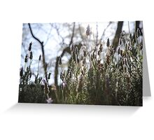 Lavender Sillouette Greeting Card