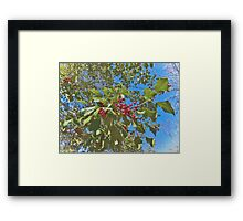 Summer Holly Framed Print