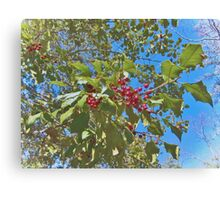 Summer Holly Canvas Print