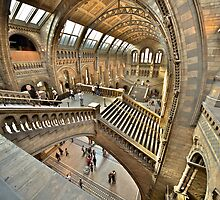 Natural History Museum Staircases by LeeMartinImages
