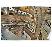 Natural History Museum Staircases Poster
