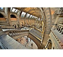 Natural History Museum Staircases Photographic Print