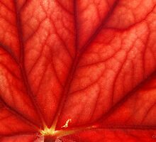 Under Shades of Red by AsEyeSee