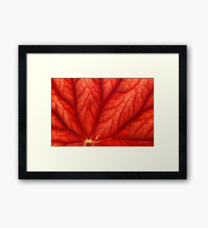 Under Shades of Red Framed Print