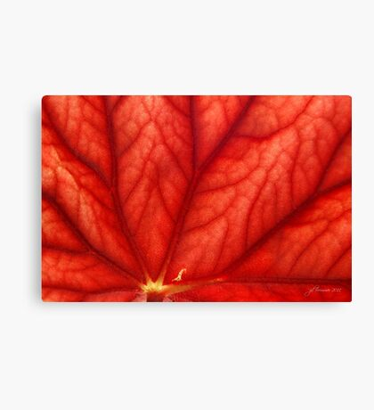 Under Shades of Red Canvas Print