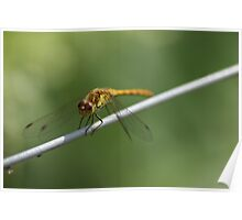 Smiley Happy Dragonfly Poster