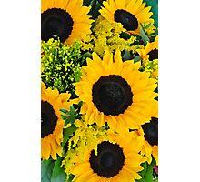 Beautiful sunflowers Photographic Print