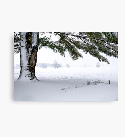 Pine Tree Framing Snow Scene Canvas Print