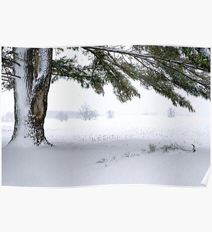 Pine Tree Framing Snow Scene Poster