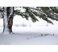 Pine Tree Framing Snow Scene Photographic Print