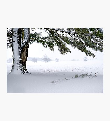 Pine Tree Framing Snow Scene Photographic Print