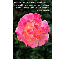 A rose in full bloom Photographic Print