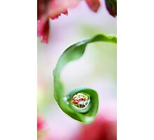 Spring Pearls Photographic Print
