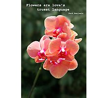 Orchid in close up Photographic Print