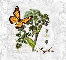 Cottage style Angelica herb Butterfly Botanical illustration art by Glimmersmith
