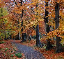 Autumn colours, Allen Banks, Northumberland by hagulstad
