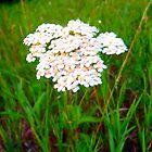 Flower by Cassie Jahn