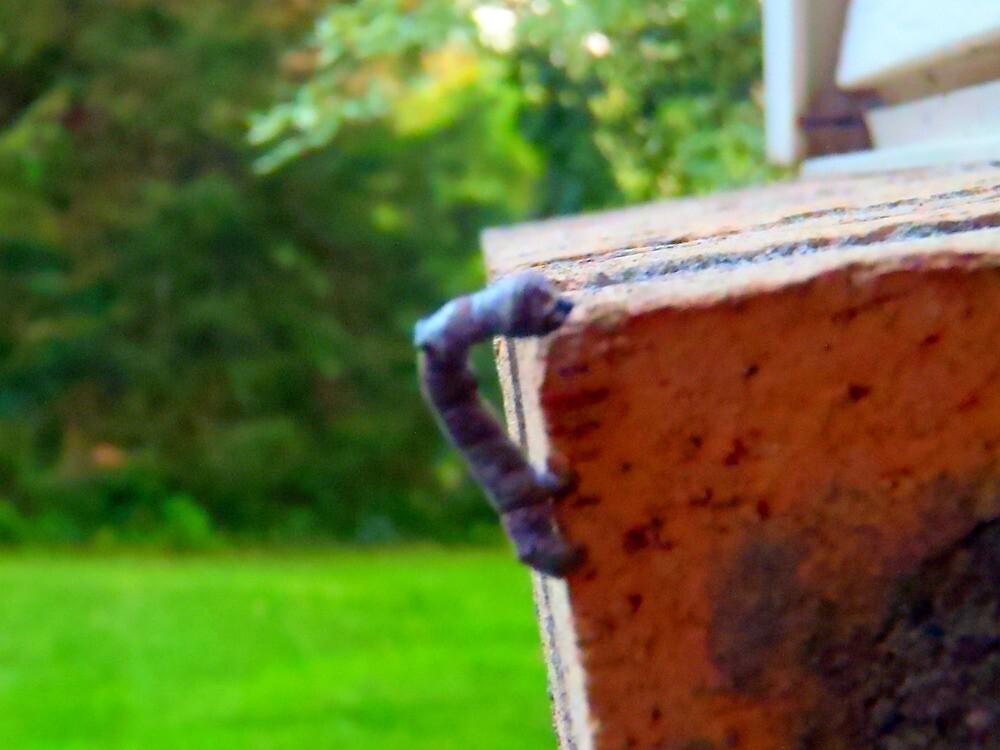 Buggy Stick by Cassie Jahn