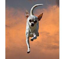 Chihuahua to the Rescue Photographic Print