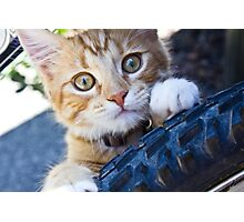 Tire Kitty Photographic Print