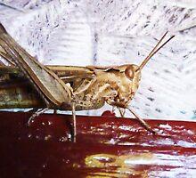 Cricket by Ecohippy