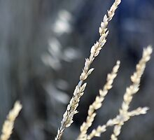 Summer's Last Grass Grains by Corri Gryting Gutzman