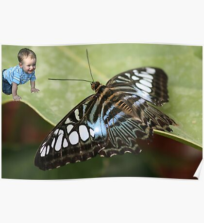"""""""Wanna play?"""" -- Toddler meets Butterfly Poster"""