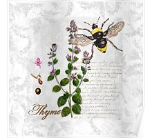 Shabby Chic Thyme herb Bumble Bee illustration art Poster
