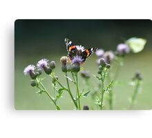 Red Admiral in the Thistle Patch Canvas Print