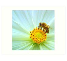 Nectar collector Art Print