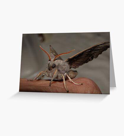 I got you, Babe... Greeting Card