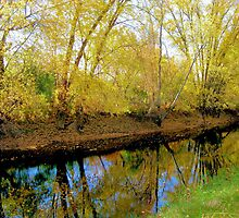 Autumn Reflections by Esperanza Gallego
