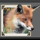 Framed Fox by Peter Barrett