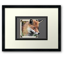 Framed Fox Framed Print