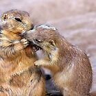 Love is Sharing your Dinner by Sue  Cullumber