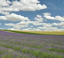 Lavender by Fotofill