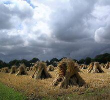 Devon ~ Somewhere Between Okehampton and Bideford. by Simon Groves