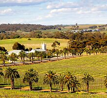 Springtime in the Barossa Valley by jwwallace