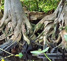 gnarly roots by jdadkin