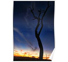 Lonely-Sunset, Bald Hills, Plainby Poster