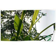 Serene greenery in Wakarusa Poster