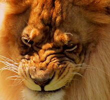 The King is Not Amused! by shutterbug2010