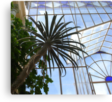 Palms and Glass Canvas Print