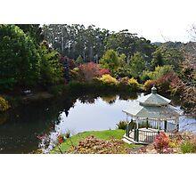 Emu Bay Rhododendron Gardens Photographic Print